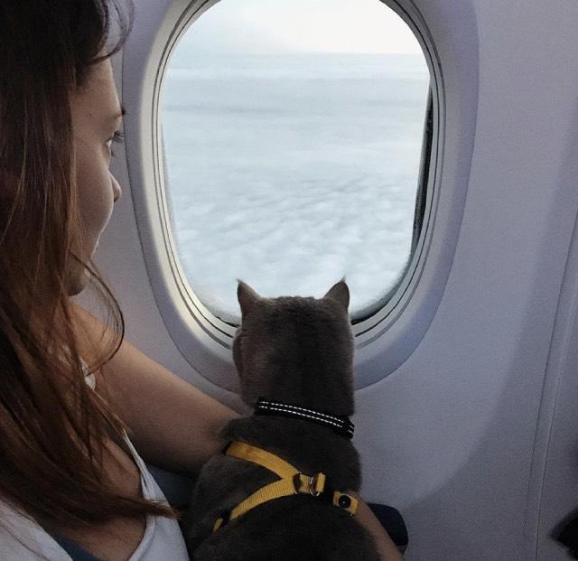 Перевозка животного в самолете