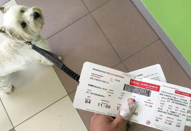билет для животного